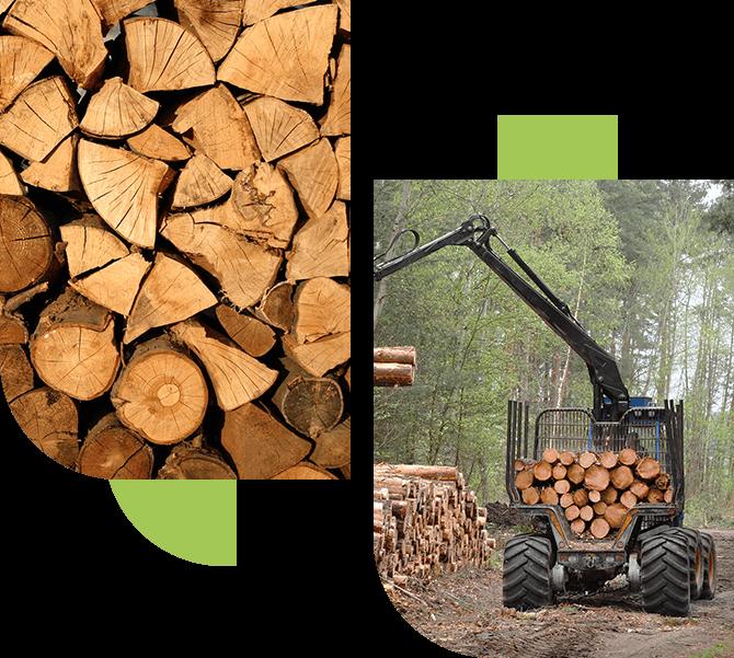 Office de Commercialisation des Produits Forestiers du Nord